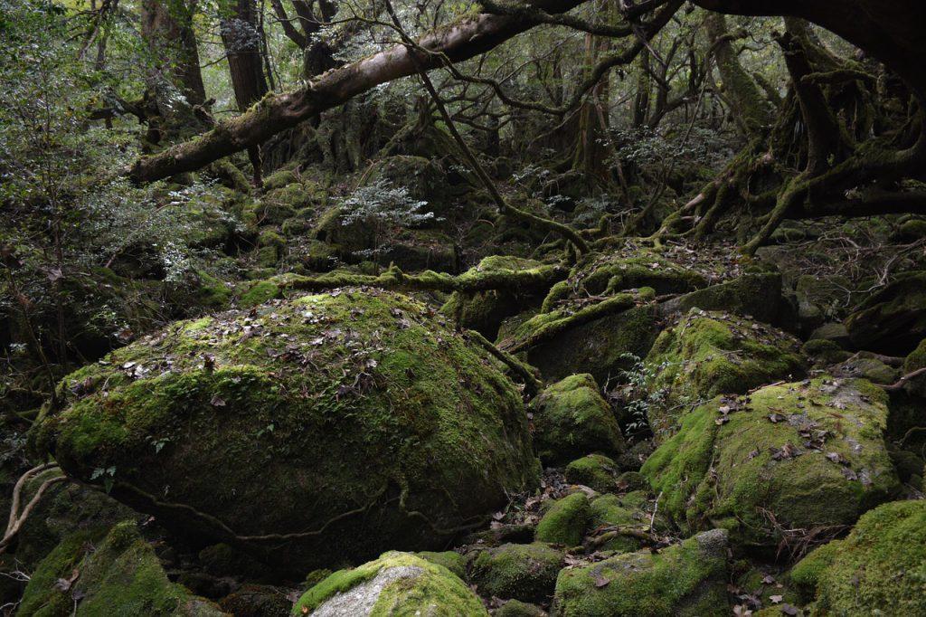 映画『もののけ姫』の舞台イメージとなった、鹿児島県屋久島