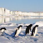 なぜ起業家のファーストペンギンはダメなのか? 避けるべきリスクと成功の近道