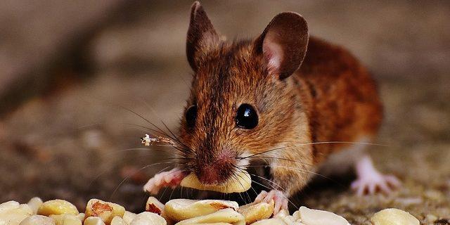 誰もがオウンドメディアで情報発信する時代。それがたとえ、ネズミでも・・・