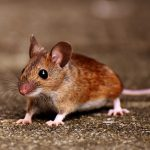 mouse-chumacher