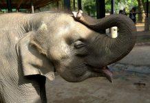 サーカスの象は鎖につながれて大きくなる